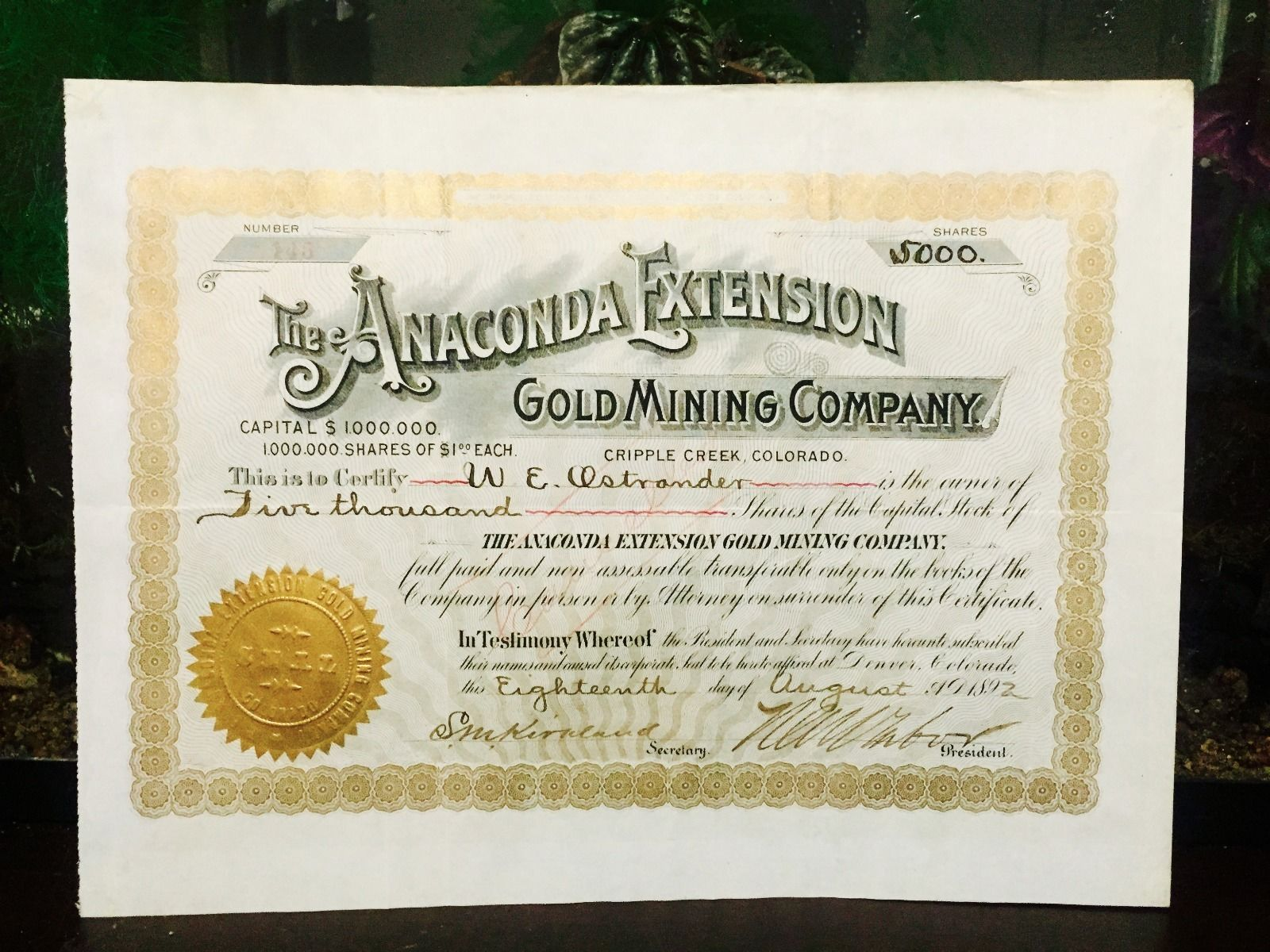 Anaconda Extension Gold Mining Company Stock of Cripple Creek